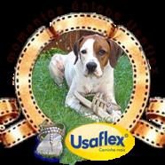 Convite especial – que dá prêmios Usaflex