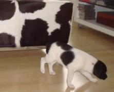 Lola – essa lindíssima cadelinha que combina com o sofá