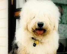 quem gosta de cachorro… GOSTA MESMO!!! – O Dumbo!!