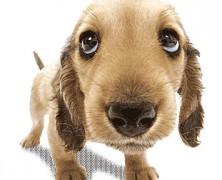 um cachorrinho sempre é um amorzinho – mesmo sendo uma ilustração