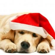 Nossos cães na ceia de Natal