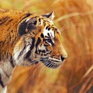 Em 40 anos, Terra perdeu mais da metade dos animais selvagens