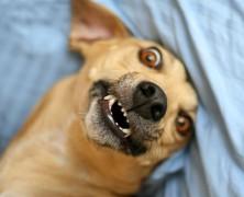 Câncer – doença comum em seres humanos e cães